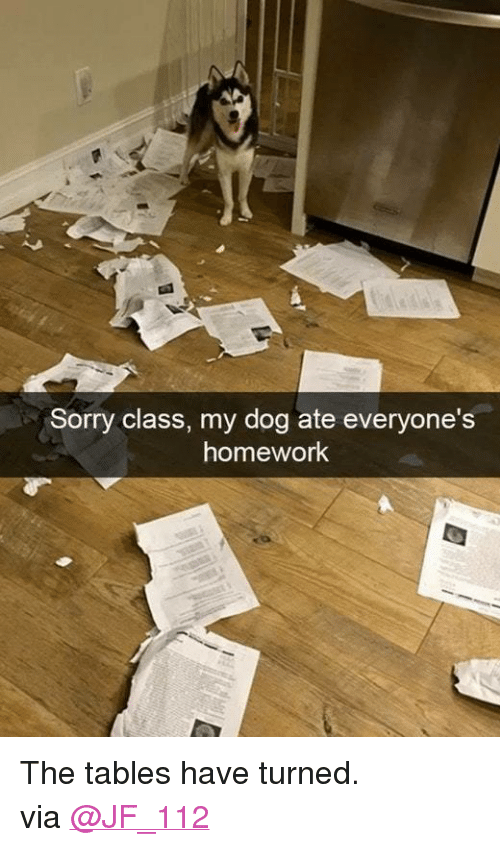 "Funny, Reddit, and Sorry: Sorry class, my dog ate everyone's  homework <p>The tables have turned.</p><p>via <a href=""https://www.reddit.com/r/funny/comments/6t0uxn/the_tables_have_turned/"" target=""_blank"">@JF_112</a></p>"