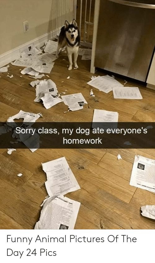 Funny, Sorry, and Animal: Sorry class, my dog ate everyone's  homework Funny Animal Pictures Of The Day 24 Pics