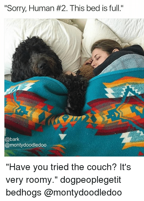 """Memes, Sorry, and Couch: """"Sorry, Human #2. This bed is full.""""  @bark  @montydoodledoo """"Have you tried the couch? It's very roomy."""" dogpeoplegetit bedhogs @montydoodledoo"""