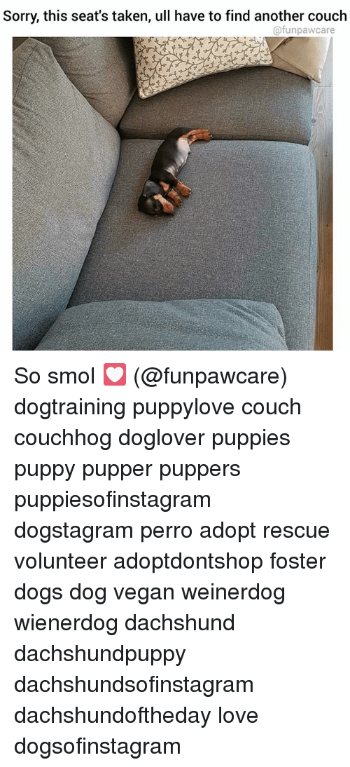 Dogs, Love, and Memes: Sorry, this seat's taken, ull have to find another couch  @funpawcare So smol 💟 (@funpawcare) dogtraining puppylove couch couchhog doglover puppies puppy pupper puppers puppiesofinstagram dogstagram perro adopt rescue volunteer adoptdontshop foster dogs dog vegan weinerdog wienerdog dachshund dachshundpuppy dachshundsofinstagram dachshundoftheday love dogsofinstagram