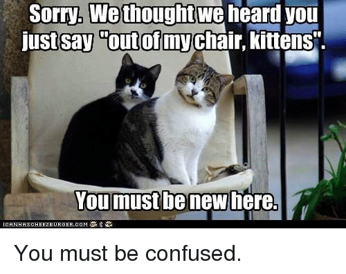 """Confused, Memes, and Sorry: Sorry, We thought  we  heard you  just say out of my  kittens"""".  You must be new here. You must be confused."""