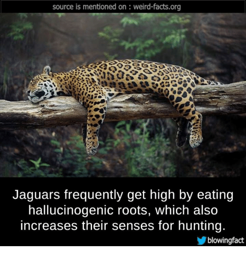 Memes, Hunting, And Jaguar: Source Is Mentioned On Weird Facts.org