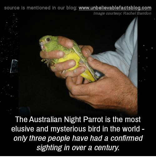 Memes, Birds, and Blog: source ls mentioned in our blog  www.unbelievablefactsblog.com  The Australian Night Parrot is the most  elusive and mysterious bird in the world  only three people have had a confirmed  sighting in over a century.