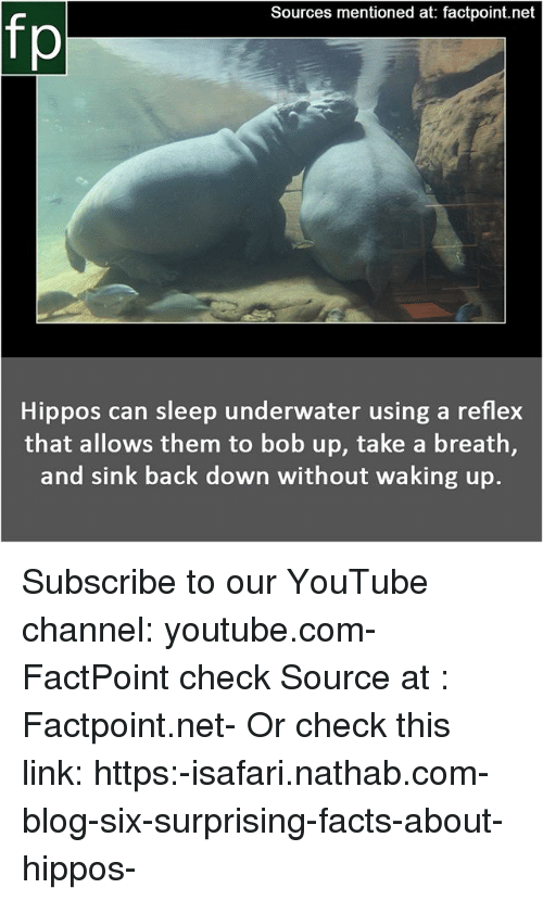 Facts, Memes, and youtube.com: Sources mentioned at: factpoint.net  fp  Hippos can sleep underwater using a reflex  that allows them to bob up, take a breath,  and sink back down without waking up. Subscribe to our YouTube channel: youtube.com-FactPoint check Source at : Factpoint.net- Or check this link: https:-isafari.nathab.com-blog-six-surprising-facts-about-hippos-