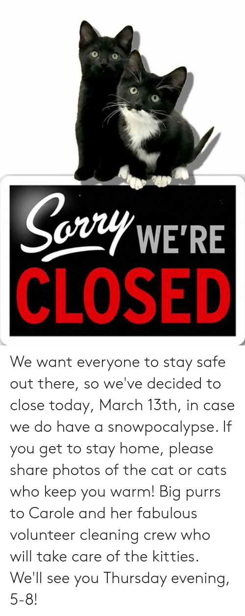 Cats, Kitties, and Memes: Sozty WE'RE  CLOSED We want everyone to stay safe out there, so we've decided to close today, March 13th, in case we do have a snowpocalypse. If you get to stay home, please share photos of the cat or cats who keep you warm!  Big purrs to Carole and her fabulous volunteer cleaning crew who will take care of the kitties. We'll see you Thursday evening, 5-8!