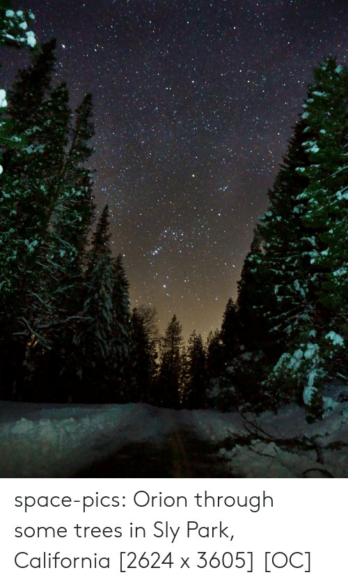 Tumblr, Blog, and California: space-pics:  Orion through some trees in Sly Park, California [2624 x 3605] [OC]