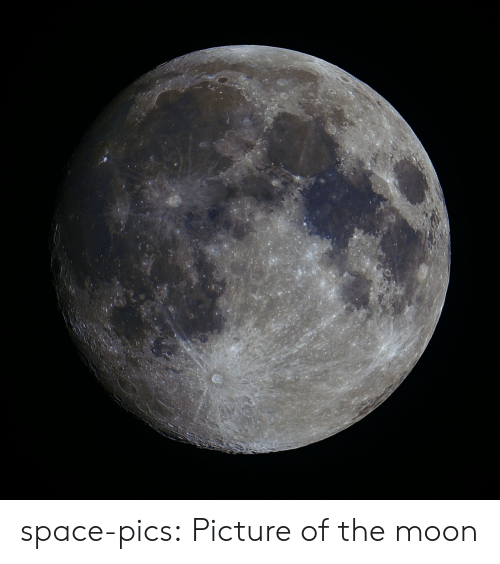 Tumblr, Blog, and Http: space-pics:  Picture of the moon