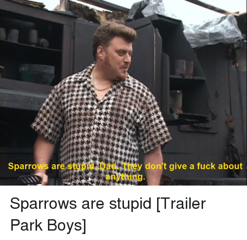 Trailer Park Boys Quotes Sparrows Are Stu a Don't Give a Fuck About Sparrows Are Stupid  Trailer Park Boys Quotes