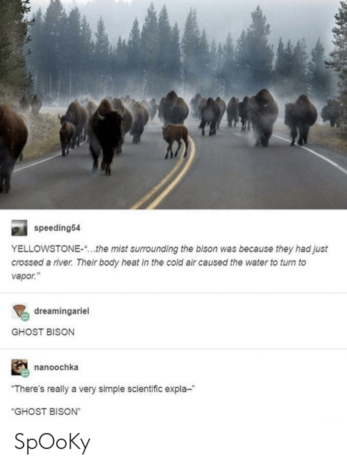 """Ghost, Heat, and Water: speeding54  YELLOWSTONE-""""...the mist surrounding the bison was because they had just  crossed a river. Their body heat in the cold air caused the water to turn to  vapor.""""  dreamingariel  GHOST BISON  nanoochka  """"There's really a very simple scientific expla-  """"GHOST BISON"""" SpOoKy"""