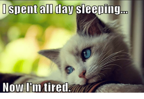 Memes, Sleeping, and 🤖: spent all day sleeping  Now l'in tired