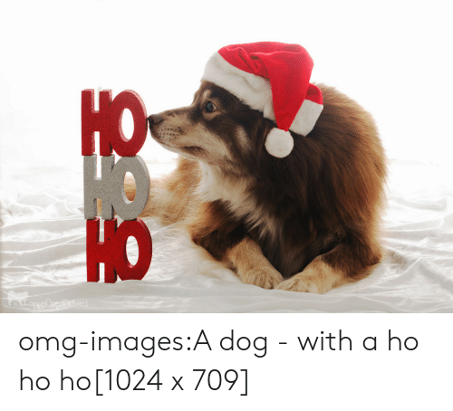 Omg, Tumblr, and Blog: sPetures omg-images:A dog - with a ho ho ho[1024 x 709]
