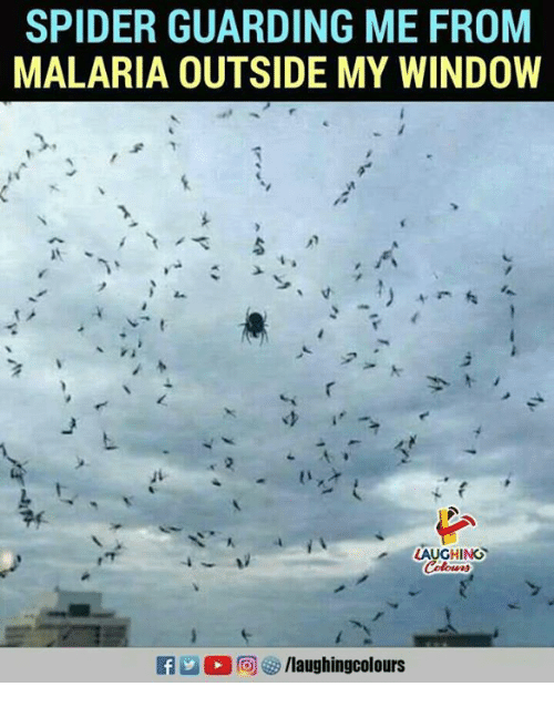 Spider, Indianpeoplefacebook, and Malaria: SPIDER GUARDING ME FROM  MALARIA OUTSIDE MY WINDOW  AUGHING