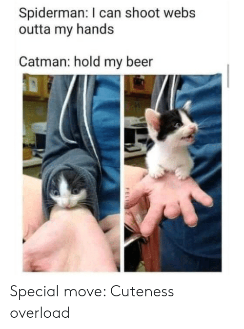 Beer, Spiderman, and Outta: Spiderman: I can shoot webs  outta my hands  Catman: hold my beer  FELI Special move: Cuteness overload