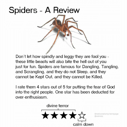 God, Spiders, and Star: Spiders A Review  Don't let how spindly and leggy they are fool you -  these little beasts will also bite the hell out of you  just for fun. Spiders are famous for Dangling. Tangling.  and Scrangling, and they do not Sleep, and they  cannot be Kept Out, and they cannot be Killed.  I rate them 4 stars out of 5 for putting the fear of God  into the right people. One star has been deducted for  over-enthusiasm  divine terror  @welcometomymemepage  @wtmmp  calm down