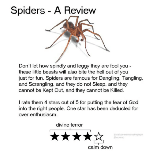 God, Spiders, and Star: Spiders A Review  Don't let how spindly and leggy they are fool you  these little beasts will also bite the hell out of you  just for fun. Spiders are famous for Dangling. Tangling.  and Scrangling. and they do not Sleep, and they  cannot be Kept Out, and they cannot be Killed.  I rate them 4 stars out of 5 for putting the fear of God  into the right people. One star has been deducted for  over-enthusiasm.  divine terror  @welcometomymemepage  @wtmmp  calm down