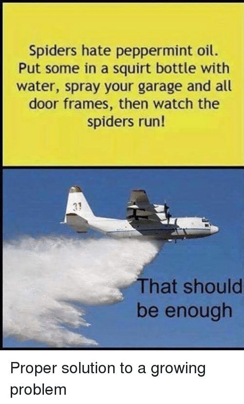 Dank, Spider, and Squirt: Spiders hate peppermint oil.  Put some in a squirt bottle with  water, spray your garage and all  door frames, then watch the  spiders run!  hat should  be enough Proper solution to a growing problem
