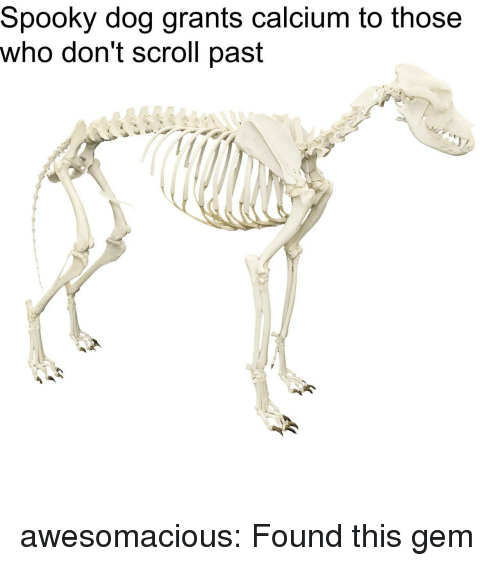Spooky Dog Grants Calcium to Those Who Don't Scroll Past