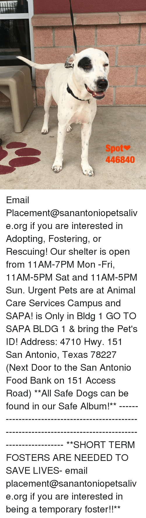 Dogs, Food, and Memes: Spot  446840 Email Placement@sanantoniopetsalive.org if you are interested in Adopting, Fostering, or Rescuing!  Our shelter is open from 11AM-7PM Mon -Fri, 11AM-5PM Sat and 11AM-5PM Sun.  Urgent Pets are at Animal Care Services Campus and SAPA! is Only in Bldg 1 GO TO SAPA BLDG 1 & bring the Pet's ID! Address: 4710 Hwy. 151 San Antonio, Texas 78227 (Next Door to the San Antonio Food Bank on 151 Access Road)  **All Safe Dogs can be found in our Safe Album!** ---------------------------------------------------------------------------------------------------------- **SHORT TERM FOSTERS ARE NEEDED TO SAVE LIVES- email placement@sanantoniopetsalive.org if you are interested in being a temporary foster!!**