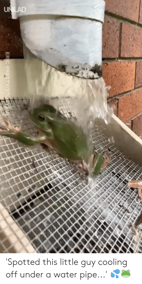 Dank, Water, and 🤖: 'Spotted this little guy cooling off under a water pipe...' 💦🐸