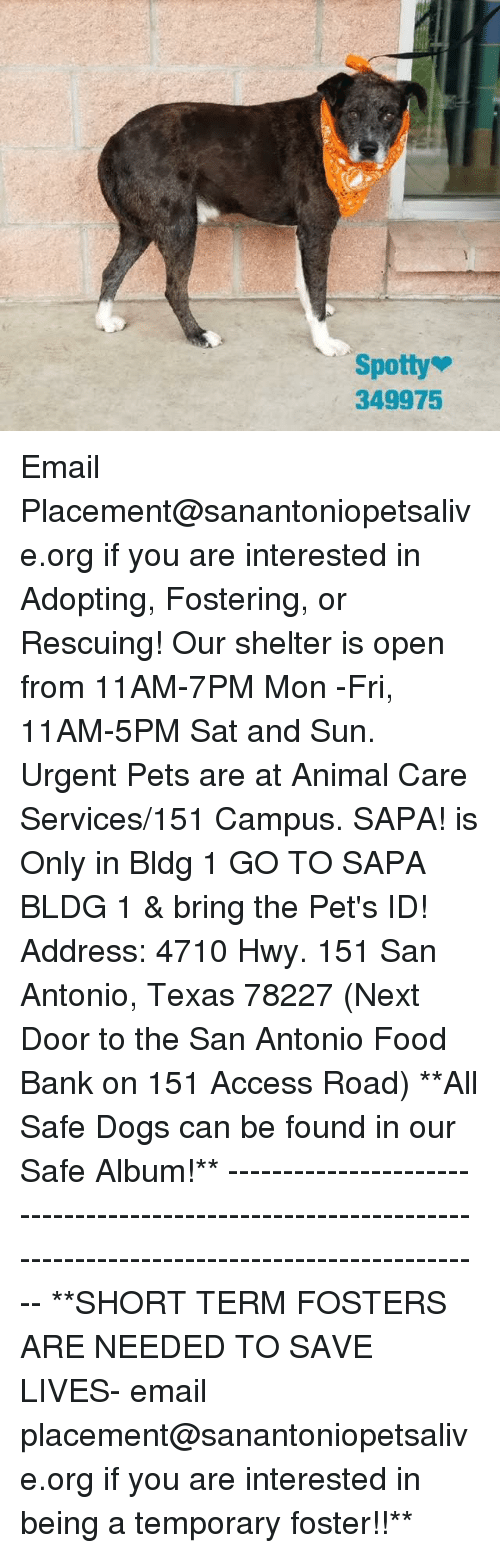 Dogs, Food, and Memes: Spotty  349975 Email Placement@sanantoniopetsalive.org if you are interested in Adopting, Fostering, or Rescuing!  Our shelter is open from 11AM-7PM Mon -Fri, 11AM-5PM Sat and Sun.  Urgent Pets are at Animal Care Services/151 Campus. SAPA! is Only in Bldg 1 GO TO SAPA BLDG 1 & bring the Pet's ID! Address: 4710 Hwy. 151 San Antonio, Texas 78227 (Next Door to the San Antonio Food Bank on 151 Access Road)  **All Safe Dogs can be found in our Safe Album!** ---------------------------------------------------------------------------------------------------------- **SHORT TERM FOSTERS ARE NEEDED TO SAVE LIVES- email placement@sanantoniopetsalive.org if you are interested in being a temporary foster!!**