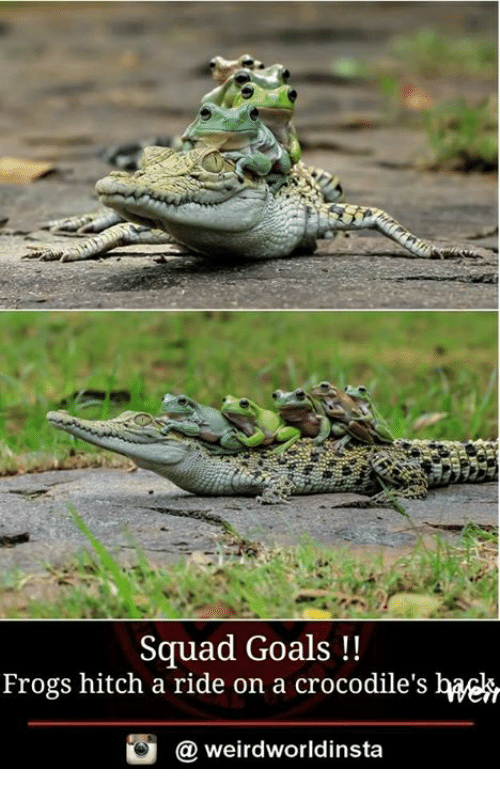 squad goals frogs hitch a ride on a crocodiles weirdworldinsta 17950402 ✅ 25 best memes about hitch a ride hitch a ride memes