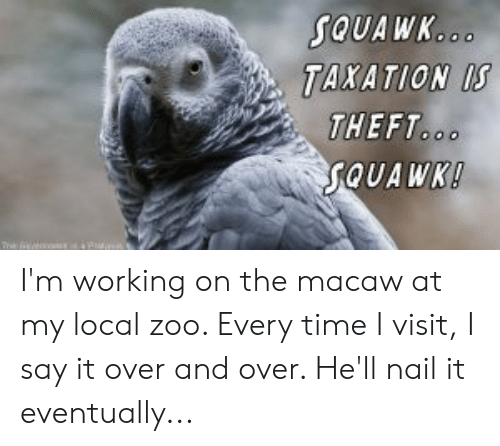 Say It, Time, and Hell: SQUAWK...  TAXATION IS  THEFT..  SQUAWK!  The I'm working on the macaw at my local zoo. Every time I visit, I say it over and over. He'll nail it eventually...