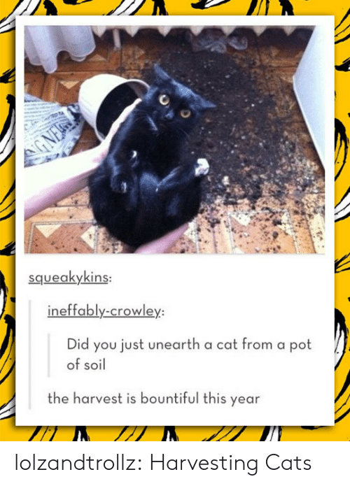 Squeakykins Ineffably-Crowley Did You Just Unearth a Cat From a Pot
