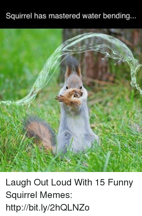 Funny Memes And Squirrel Has Mastered Water Bending Laugh  C B Laugh Out Loud