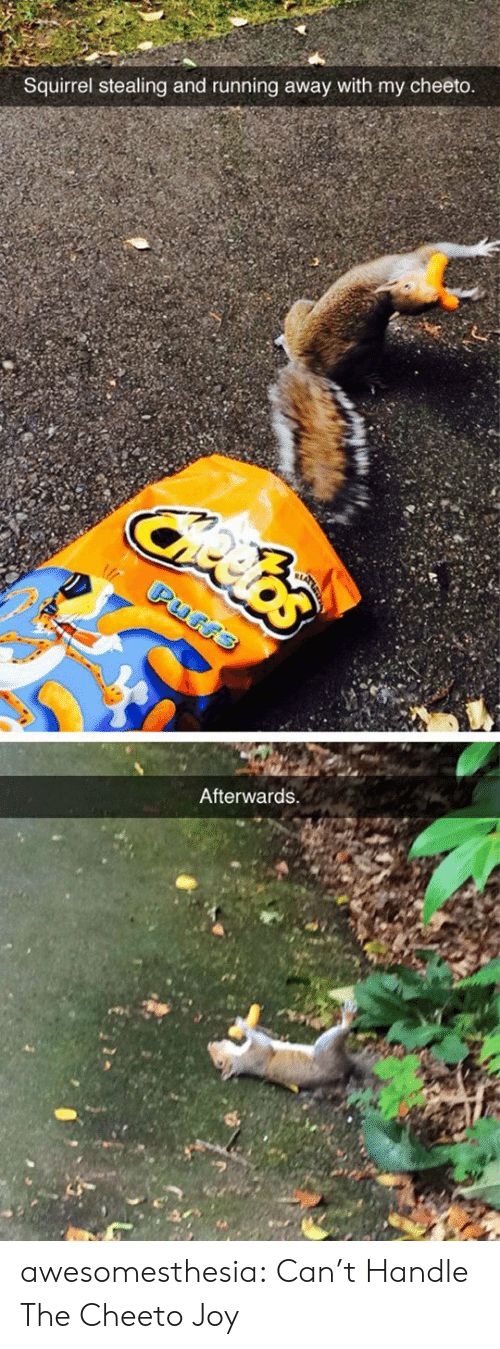 Tumblr, Blog, and Squirrel: Squirrel stealing and running away with my cheeto  Afterwards awesomesthesia:  Can't Handle The Cheeto Joy