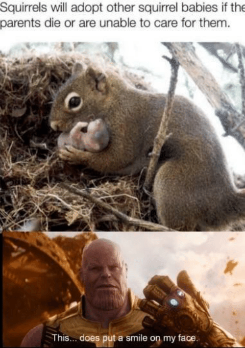 Parents, Smile, and Squirrel: Squirrels will adopt other squirrel babies if the  parents die or are unable to care for them  This... does put a smile on my face