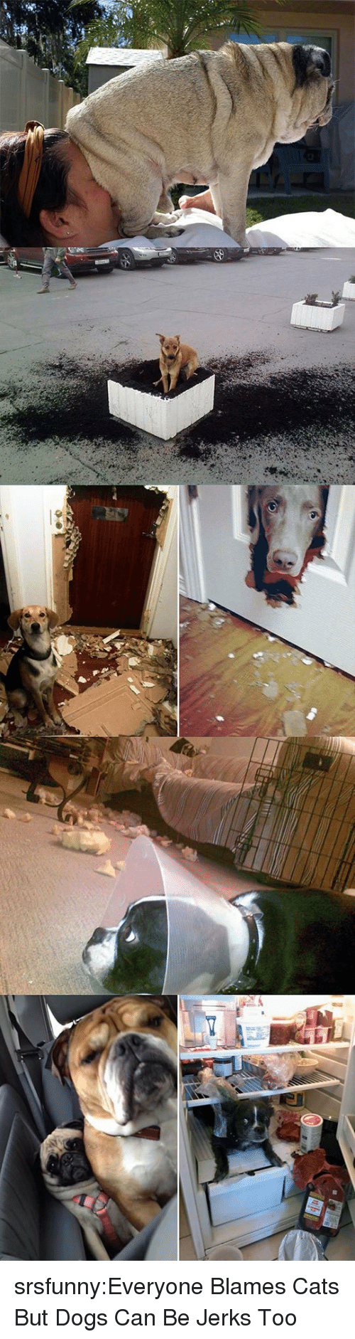 Cats, Dogs, and Tumblr: srsfunny:Everyone Blames Cats But Dogs Can Be Jerks Too