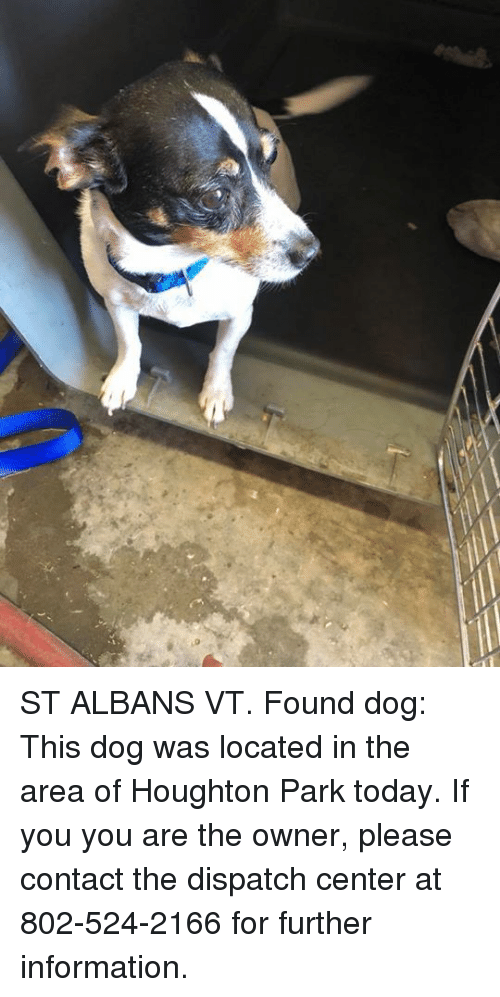 ST ALBANS VT Found Dog This Dog Was Located in the Area of