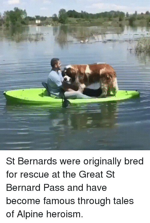 Funny, Tales Of, and Tales: St Bernards were originally bred for rescue at the Great St Bernard Pass and have become famous through tales of Alpine heroism.