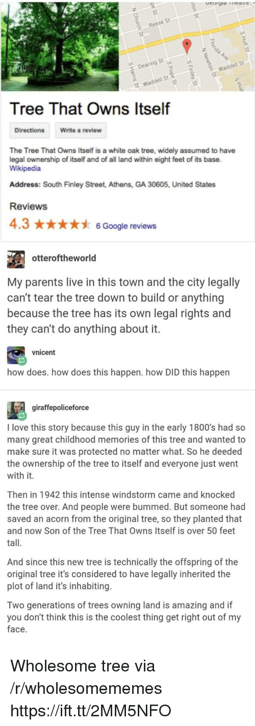 Google, Love, and Parents: St  Rees  9  St  De  wadde  St  Tree That Owns Itself  Directions  Write a review  The Tree That Owns Itself is a white oak tree, widely assumed to have  legal ownership of itself and of all land within eight feet of its base  Wikipedia  Address: South Finley Street, Athens, GA 30605, United States  Reviews  4.36 Google reviews  otteroftheworld  My parents live in this town and the city legally  can't tear the tree down to build or anything  because the tree has its own legal rights and  they can't do anything about it  vnicent  how does. how does this happen. how DID this happen  gíraffepoliceforce  I love this story because this guy in the early 1800's had so  many great childhood memories of this tree and wanted to  make sure it was protected no matter what. So he deeded  the ownership of the tree to itself and everyone just went  with it.  Then in 1942 this intense windstorm came and knocked  the tree over. And people were bummed. But someone had  saved an acorn from the original tree, so they planted that  and now Son of the Tree That Owns Itself is over 50 feet  tall.  And since this new tree is technically the offspring of the  original tree it's considered to have legally inherited the  plot of land it's inhabiting.  Two generations of trees owning land is amazing and if  you don't think this is the coolest thing get right out of my  face Wholesome tree via /r/wholesomememes https://ift.tt/2MM5NFO