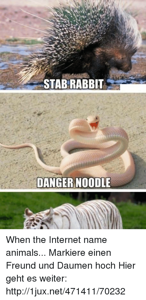 stab rabbit danger noodle when the internet name animals markiere