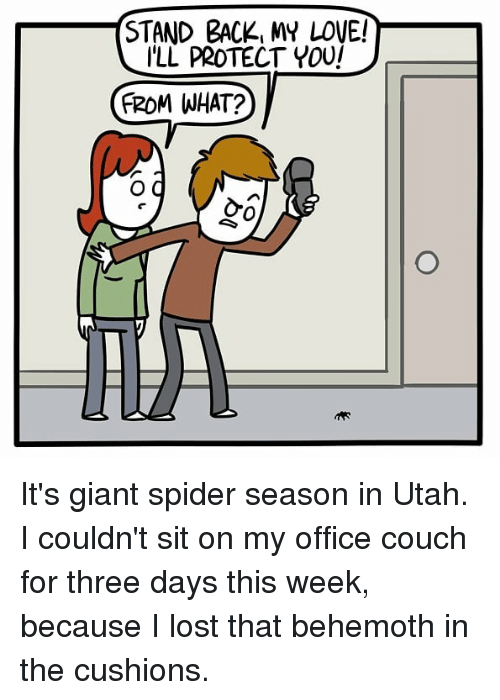 Love, Memes, and Spider: STAND BACK, MY LOVE!  ILL PROTECT YOU  (ROMI WHAT?  0 It's giant spider season in Utah. I couldn't sit on my office couch for three days this week, because I lost that behemoth in the cushions.
