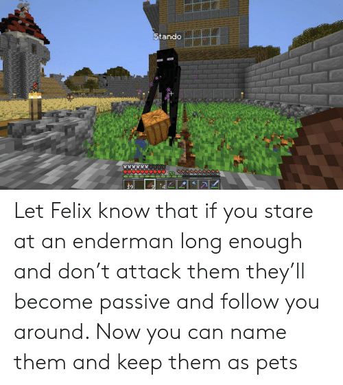 Stando Let Felix Know That if You Stare at an Enderman Long
