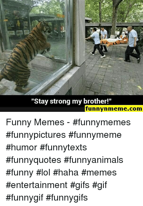 """Funny, Gif, and Lol: """"Stay strong my brother!""""  funnynmeme.com Funny Memes - #funnymemes #funnypictures #funnymeme #humor #funnytexts #funnyquotes #funnyanimals #funny #lol #haha #memes #entertainment #gifs #gif #funnygif #funnygifs"""