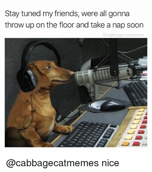 Friends, Soon..., and Dank Memes: Stay tuned my friends, were all gonna  throw up on the floor and take a nap soon  cabbagecatmemes @cabbagecatmemes nice