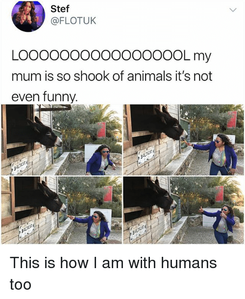 Animals, Funny, and Memes: Stef  @FLOTUK  LOOoooo0O0OOOOOOOL my  mum is so shook of animals it's not  even funny. This is how I am with humans too