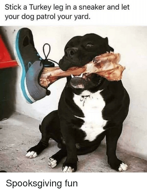 Stick a Turkey Leg in a Sneaker and Let Your Dog Patrol Your