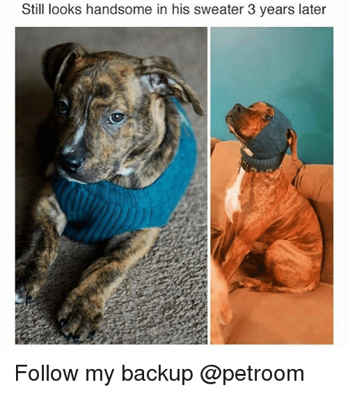 Funny, Backup, and Handsome: Stil looks handsome in his sweater 3 years later Follow my backup @petroom