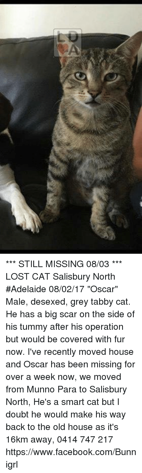 "Facebook, Memes, and Lost: *** STILL MISSING 08/03 ***  LOST CAT Salisbury North #Adelaide 08/02/17 ""Oscar"" Male, desexed, grey tabby cat. He has a big scar on the side of his tummy after his operation but would be covered with fur now. I've recently moved house and Oscar has been missing for over a week now, we moved from Munno Para to Salisbury North, He's a smart cat but I doubt he would make his way back to the old house as it's 16km away,  0414 747 217 https://www.facebook.com/Bunnigrl"