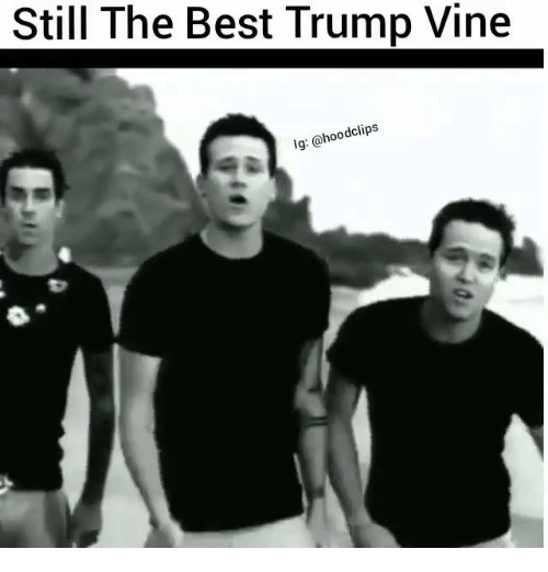 The Best,  Still the Best, and Best Trump: Still The Best Trump Vine  dclips  lg: a