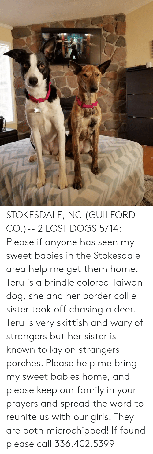 Deer, Dogs, and Family: STOKESDALE, NC (GUILFORD CO.)-- 2 LOST DOGS  5/14: Please if anyone has seen my sweet babies in the Stokesdale area help me get them home. Teru is a brindle colored Taiwan dog, she and her border collie sister took off chasing a deer. Teru is very skittish and wary of strangers but her sister is known to lay on strangers porches. Please help me bring my sweet babies home, and please keep our family in your prayers and spread the word to reunite us with our girls. They are both microchipped! If found please call 336.402.5399
