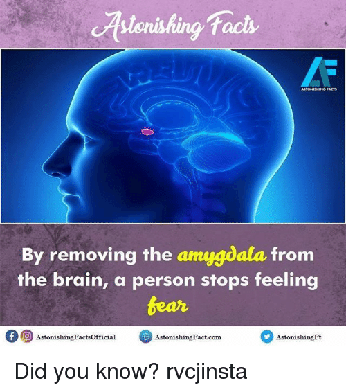 Memes, 🤖, and Amygdala: stonishing facts  ASTONISHING FACTS  By removing the  amygdala from  the brain, a person stops feeling  f 9 AstonishingFactsofficial  Astonishing Fact com  Astonishing Ft Did you know? rvcjinsta