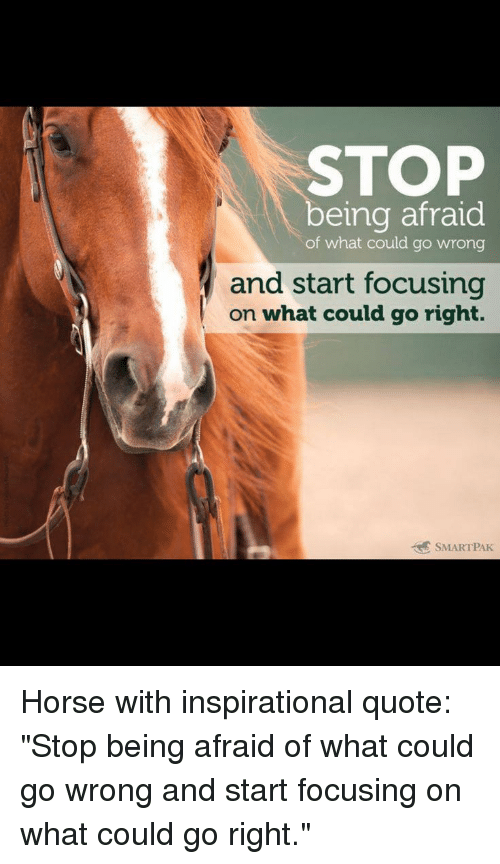 """Horse, Quote, and What: STOP  being afraid  of what could go wrong  and start focusing  on what could go right.  7  SMARTPAK Horse with inspirational quote: """"Stop being afraid of what could go wrong and start focusing on what could go right."""""""