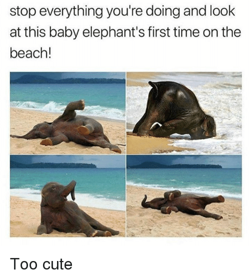 Cute, Dank, and Beach: stop everything you're doing and look  at this baby elephant's first time on the  beach! Too cute