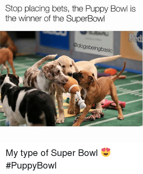 stop placing bets the puppy bowl is the winner of 13853551 25 best puppy bowl memes jobbing memes, my dreams memes, to do
