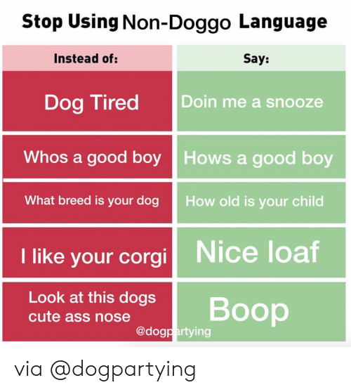 Corgi, Instagram, and Target: Stop Using Non-Doggo Language  Instead of:  Say:  Dog Tired Doin me a snooze  Whos a good boy Hows a good boy  What breed is your dog  How ald is your child  I like your corgi  Nice loaf  Look at this dogsBoop  @dogpartying via @dogpartying